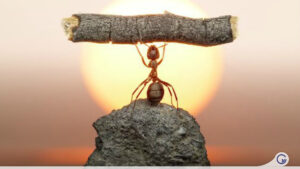 parabola da formiga